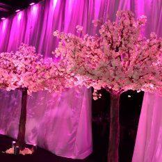 Blossom treets